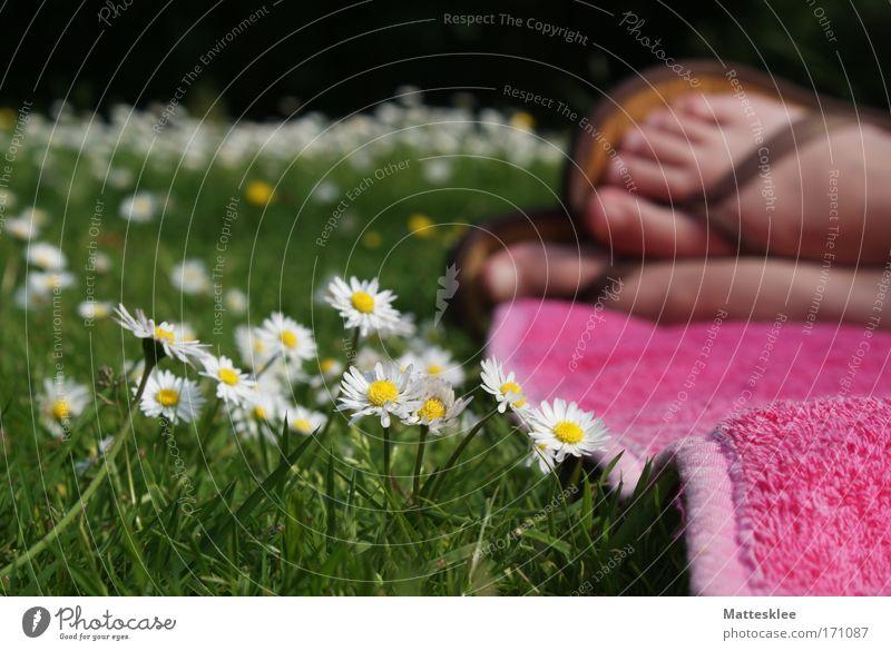 Sommertag Mensch Frau Sonne Sommer ruhig Erwachsene Erholung Leben Freiheit Garten Stimmung Fuß Gesundheit Zufriedenheit natürlich Lifestyle