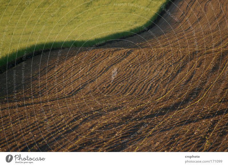 Klare Kante Natur grün Pflanze ruhig Tier Sand Landschaft braun Feld Umwelt Erde Streifen Schönes Wetter Nutzpflanze