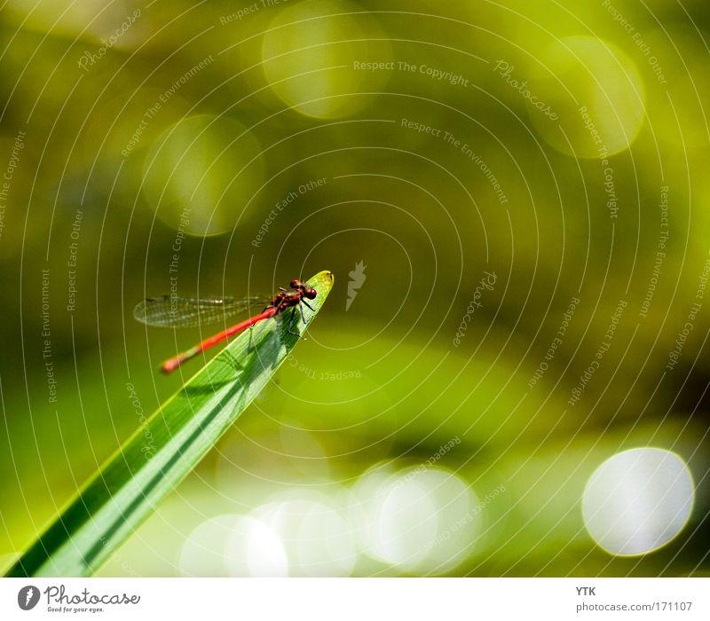 Die Bretter, die die Welt bedeuten! grün Pflanze Tier Leben Stimmung warten glänzend fliegen Sicherheit Pause weich Flügel wild Spitze leuchten Wildtier