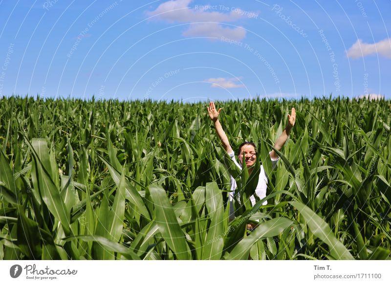 Maisfeld Mensch feminin Frau Erwachsene Kopf Arme Hand 1 30-45 Jahre Umwelt Himmel Horizont Feld Kraft Mädchen Wolken grün blau Farbfoto Außenaufnahme Tag