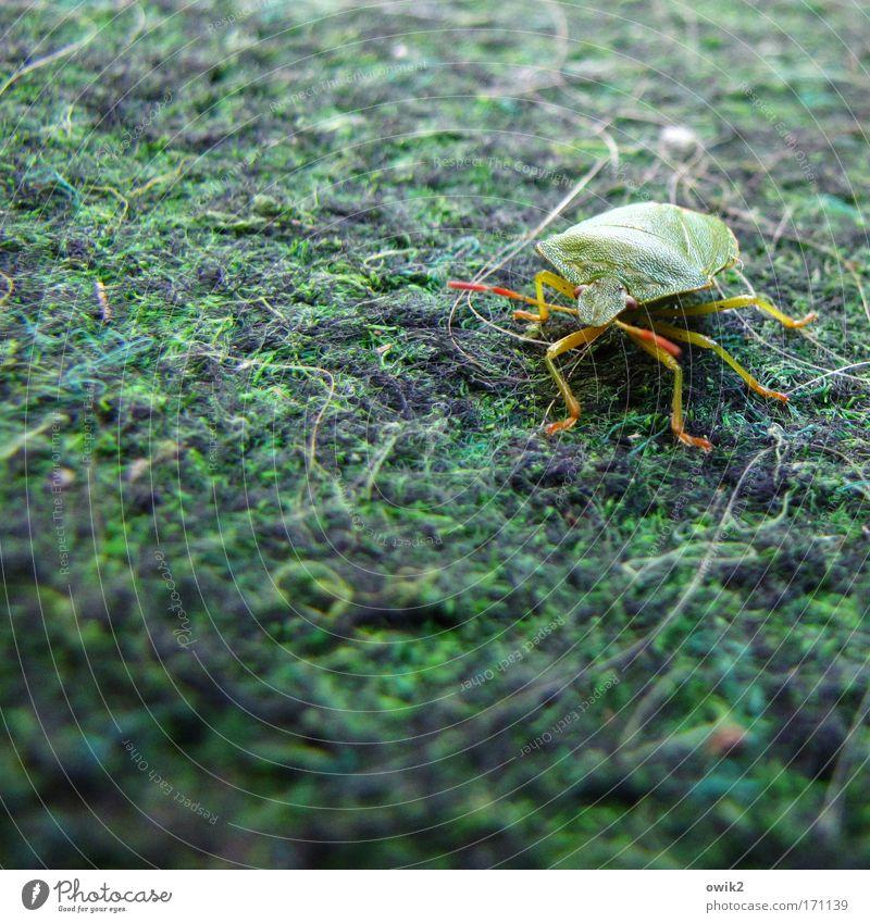 Tarnfarbe grün Tier Bewegung warten Insekt beobachten außergewöhnlich Neugier Wildtier Respekt Interesse Käfer Stolz klug krabbeln selbstbewußt