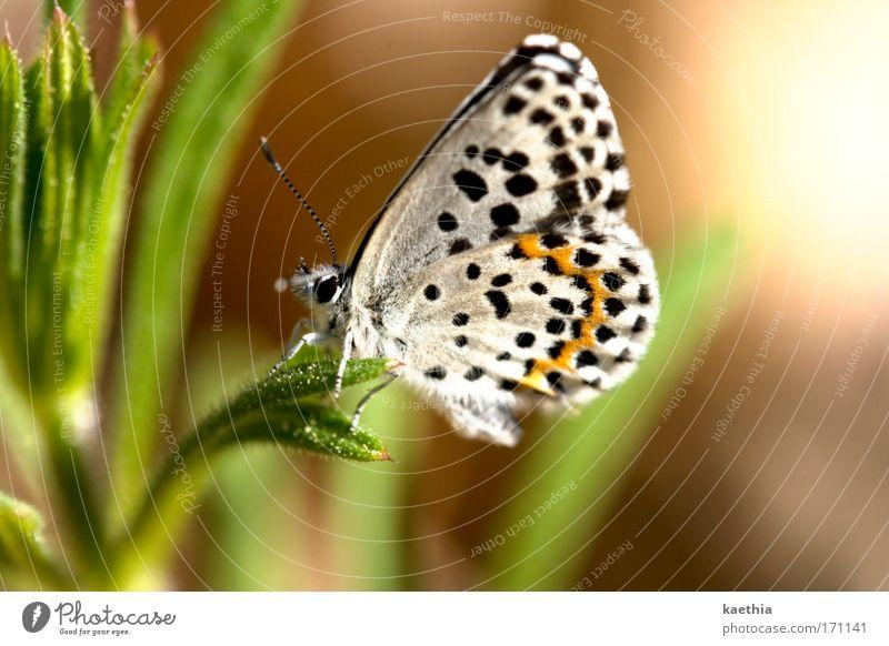 butterfly effect - third round Farbfoto Außenaufnahme Makroaufnahme Tag Sonnenlicht Schwache Tiefenschärfe Umwelt Natur Sommer Pflanze Gras Wiese Tier