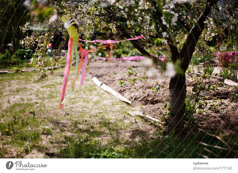 Windstill Natur Baum Pflanze ruhig Einsamkeit Leben Wiese Gefühle Blüte Bewegung Frühling Garten Freiheit Glück träumen Traurigkeit