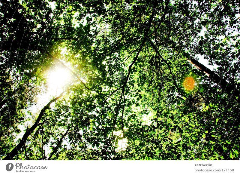 Sommer Natur Baum Sonne grün Pflanze Blatt Wald Erholung Ausflug Spaziergang Dach Umweltschutz Sauerstoff Brandenburg Laubwald Mischwald