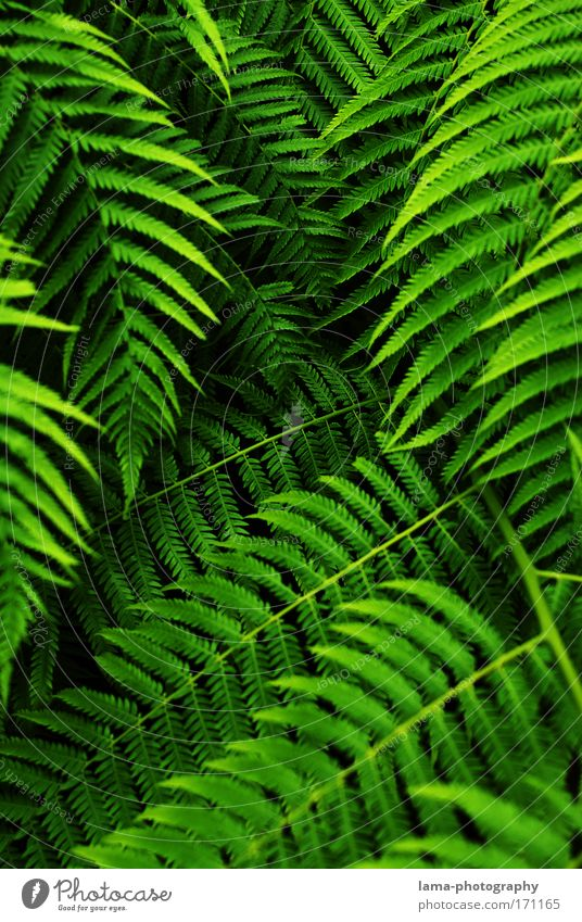 tropical curtain (Dschungel) Farn Feng Shui Urwald Palme grün Farbfoto Außenaufnahme Nahaufnahme Detailaufnahme Makroaufnahme Strukturen & Formen