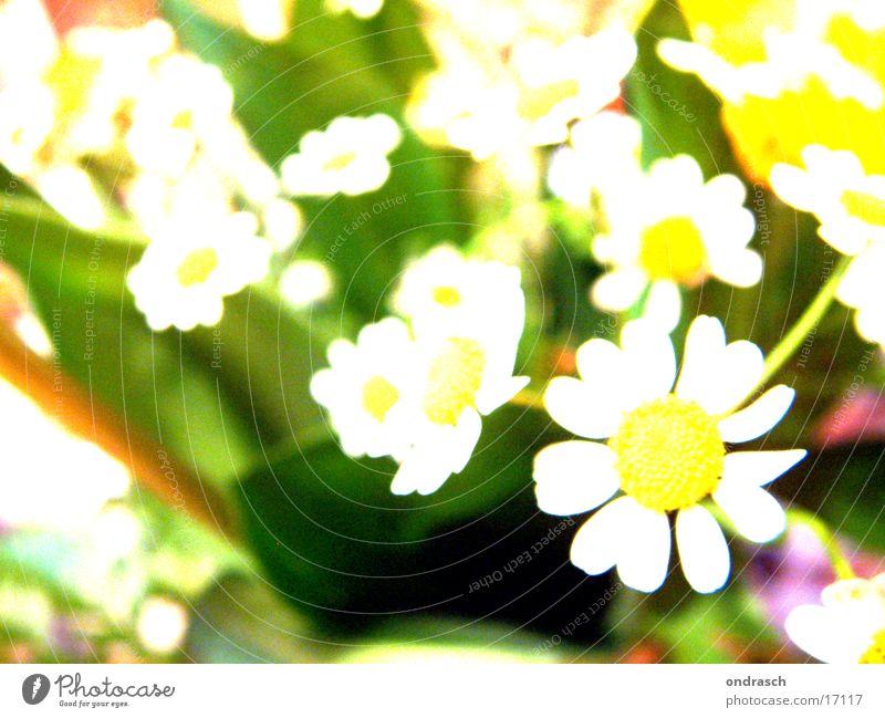 xtrem_flower_crossing Blume Licht gelb Sommer Frühling springen Fototechnik light Garten