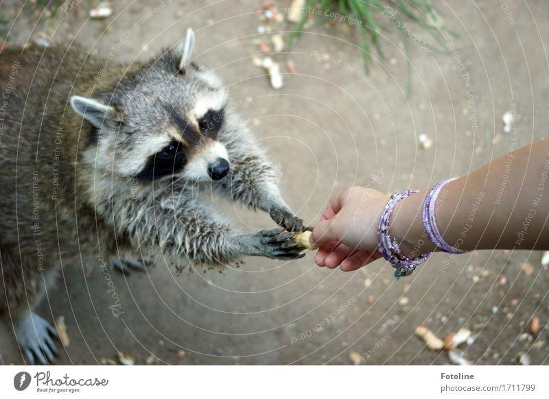 Lass uns teilen! Mensch Mädchen Junge Frau Jugendliche Erwachsene Haut Arme Hand Finger Umwelt Natur Pflanze Tier Urelemente Erde Sand Gras Wiese Wildtier