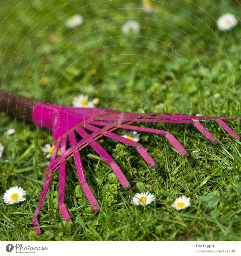Zeigen, was ne Harke ist Blume grün Pflanze Sommer Arbeit & Erwerbstätigkeit Wiese Gras Frühling Garten Kitsch Sportrasen Gänseblümchen Gartenbau Gartenarbeit