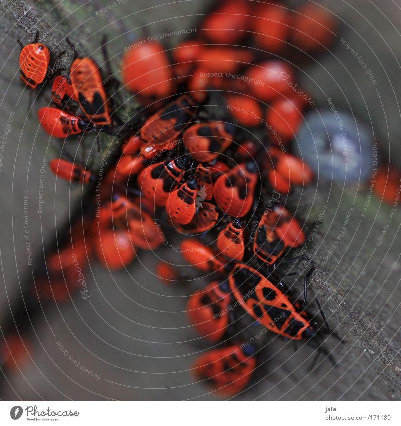 Familienzusammenhalt Natur rot Tier Wiese Holz Garten braun Park Tiergruppe Team Gesellschaft (Soziologie) Käfer Rudel Versammlung