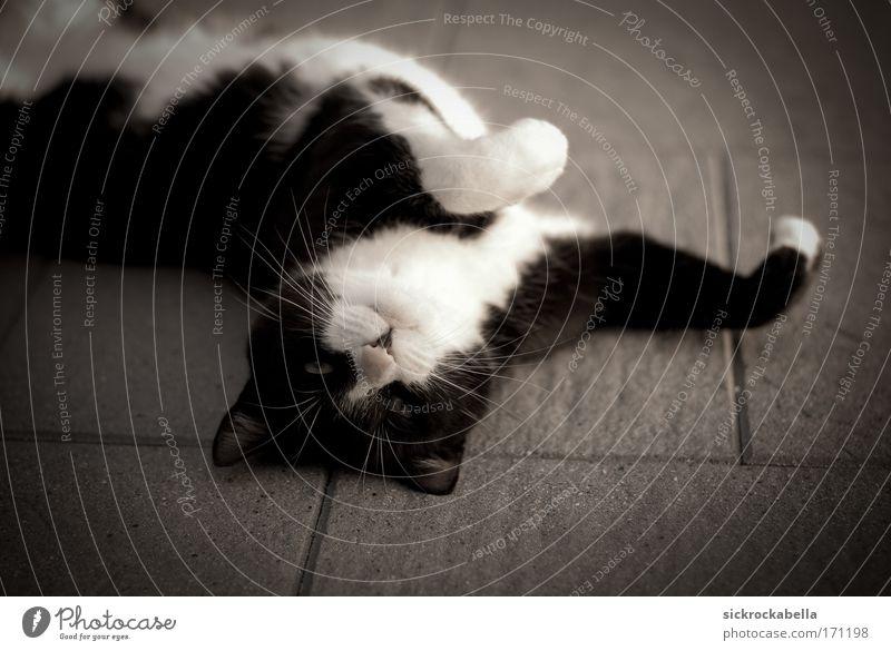 momo Tier Spielen Glück Stein Katze Zufriedenheit Fröhlichkeit Tiergesicht liegen Fell Pfote Haustier bequem