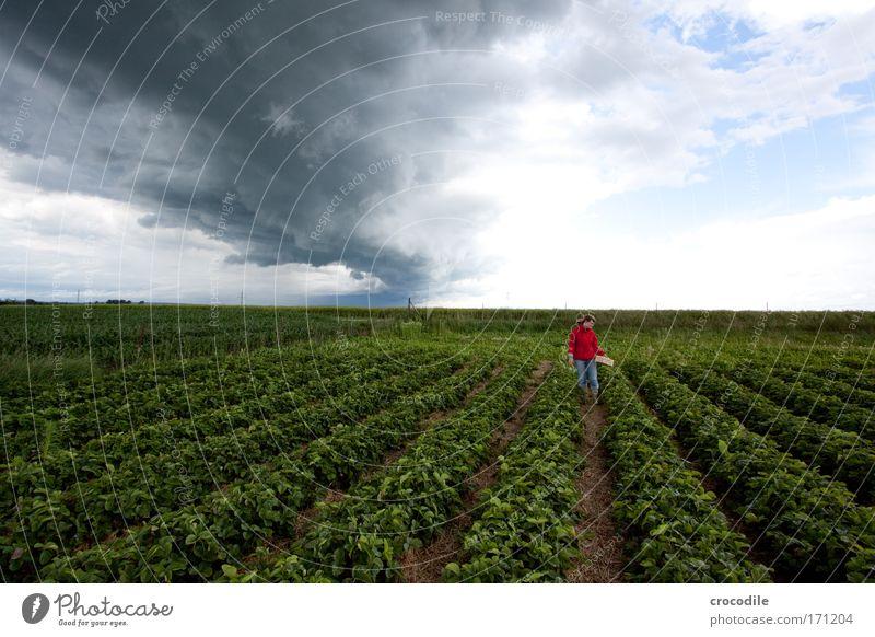 Erdbeerfeld Mensch Himmel Natur rot Pflanze Sommer Umwelt Landschaft Bewegung Feld Klima ästhetisch Bekleidung einzigartig Jeanshose Schönes Wetter