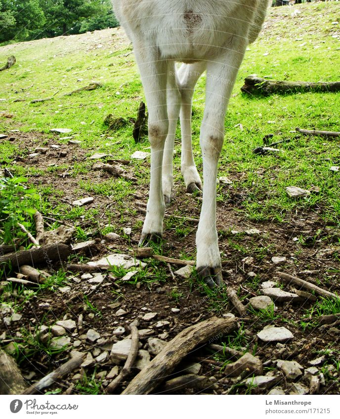 Disney's Bambi IV Natur Baum Tier Umwelt Wiese Gras Deutschland Erde Wildtier Ausflug ästhetisch beobachten Neugier Fell Zoo Jagd