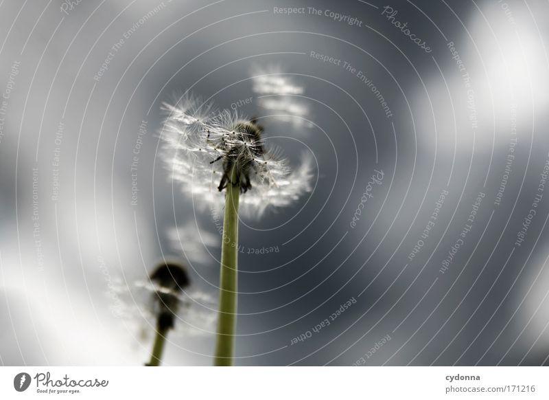Davon fliegen Natur Blume Pflanze Leben Gefühle Bewegung Freiheit träumen Traurigkeit elegant Umwelt Zukunft Ziel Wandel & Veränderung Vergänglichkeit