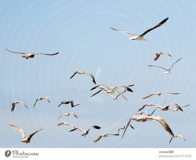 Vogelperspektive. Himmel Ferien & Urlaub & Reisen Meer Ferne Freiheit Luft Horizont Wind fliegen Feder viele Ziel Schönes Wetter Zeichen Ostsee Möwe