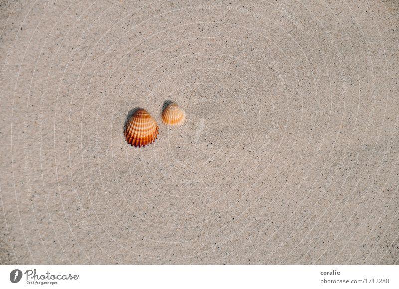 zweisamkeit Sommer maritim Muschel 2 Zusammensein Paar Strand Strandspaziergang Strandgut Mittelmeer Ferien & Urlaub & Reisen Souvenir Meeresfrüchte