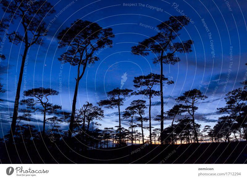 Schattenbildlandschaft mit Kiefernwald bei Phu Soi Dao schön Ferien & Urlaub & Reisen Sonne Natur Landschaft Pflanze Himmel Baum Park Wald Gipfel dunkel