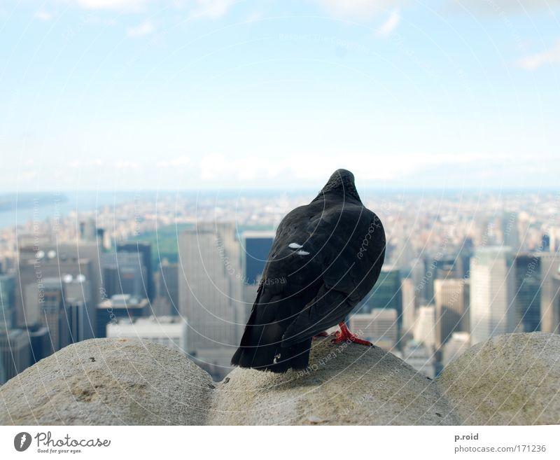 20 Dollar Farbfoto Außenaufnahme Tag Zentralperspektive New York City USA Amerika Haus Hochhaus Bankgebäude Turm Bauwerk Gebäude Dach Schornstein