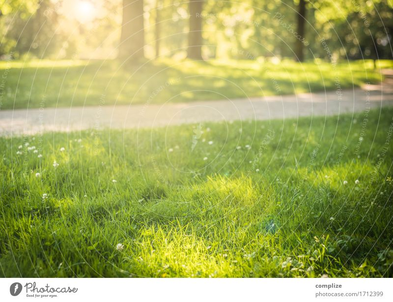 Sonne im Park Lifestyle Wohlgefühl Sinnesorgane Freizeit & Hobby Umwelt Natur Landschaft Pflanze Urelemente Klima Schönes Wetter Baum Blume Gras Sträucher