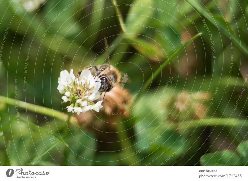 Bestäuber Natur Pflanze Sommer grün weiß Landschaft Tier schwarz Umwelt Blüte Wiese Gras Garten Arbeit & Erwerbstätigkeit Erde frisch