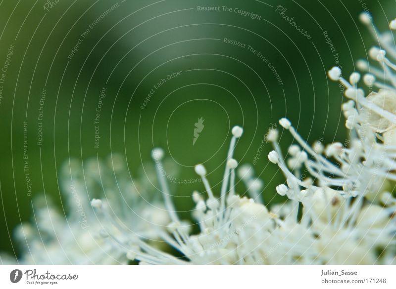 Der Frühling ist noch nicht vorbei Natur weiß Blume grün Pflanze Wiese Blüte Park Umwelt Grünpflanze