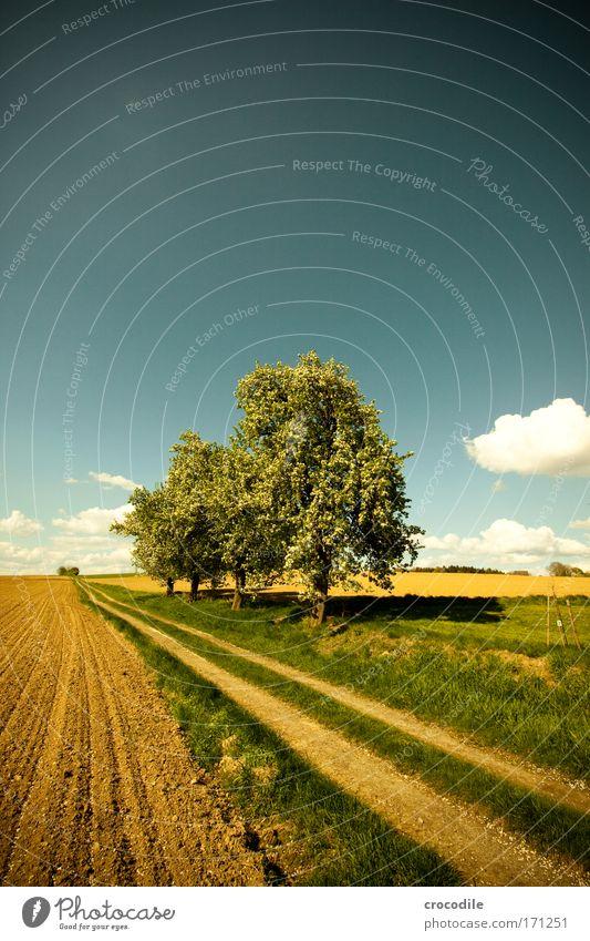 Apfelblüte VI Farbfoto Außenaufnahme Experiment Menschenleer Tag Starke Tiefenschärfe Zentralperspektive Weitwinkel Umwelt Natur Landschaft Erde Wolken Frühling