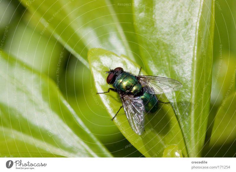 Fliege Natur schön Pflanze Sommer Auge Tier Leben Landschaft Zufriedenheit Umwelt ästhetisch bedrohlich Flügel außergewöhnlich Wildtier