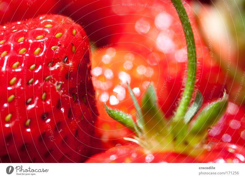Rote Versuchung Frucht Natur Pflanze Umwelt ästhetisch Beeren Erdbeeren Frühlingsgefühle Erdbeersorten