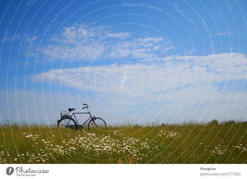 Pause II Natur Himmel Sonne Blume Sommer Ferien & Urlaub & Reisen ruhig Einsamkeit Erholung Gras Zufriedenheit Fahrrad wandern Ausflug Wiese