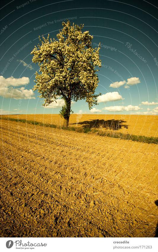 Apfelblüte VII Natur Baum Pflanze Blatt Wolken Umwelt Landschaft Blüte Frühling Wetter Feld Erde Hügel skurril Schönes Wetter Umweltschutz