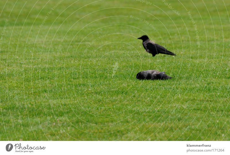 Flach gelegt Natur Pflanze Einsamkeit Tier Wiese Tod dunkel Gefühle Gras Garten Traurigkeit Park Freundschaft Zusammensein Vogel warten