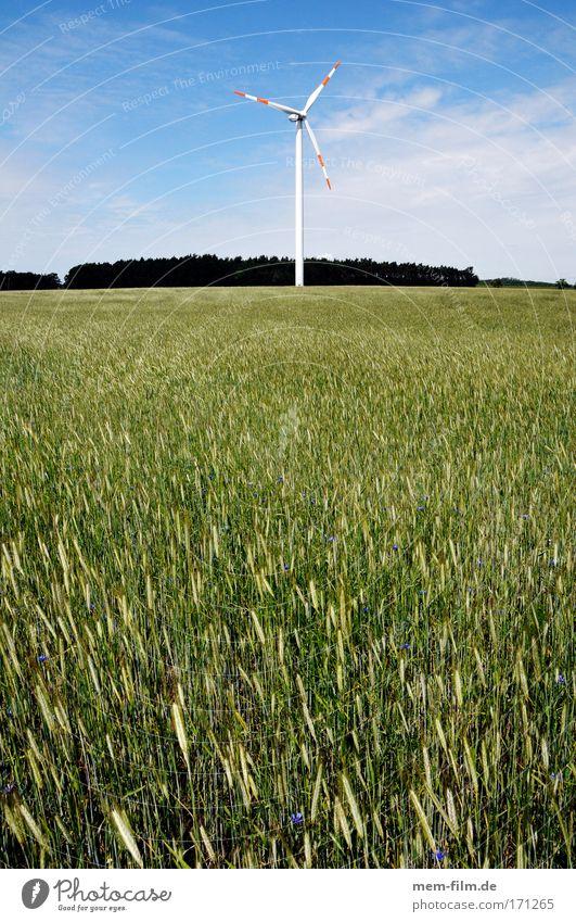 windrad mit biomasse grün Landschaft Feld Wind Elektrizität Getreide Zerstörung Weizen Brandenburg Roggen Energie Erneuerbare Energie
