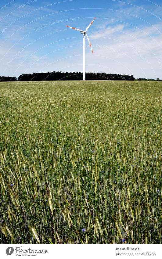 windrad mit biomasse Weizen Roggen Getreide Feld Erneuerbare Energie energie Wind Elektrizität grün Landschaft Zerstörung Brandenburg
