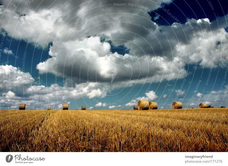 ernte Himmel Natur blau Sommer Wolken gelb Herbst Landschaft Feld gold Wind Landwirtschaft bedrohlich Außenaufnahme Heu Getreide