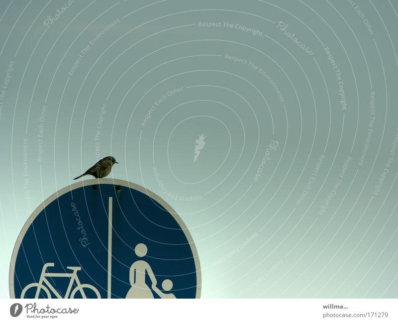 Spatz auf einem Verkehrsschild in großer Entscheidungsnot Vogel Sperling Verkehrszeichen Fahrradweg Fußweg Fußgänger Verkehrswege Zeichen