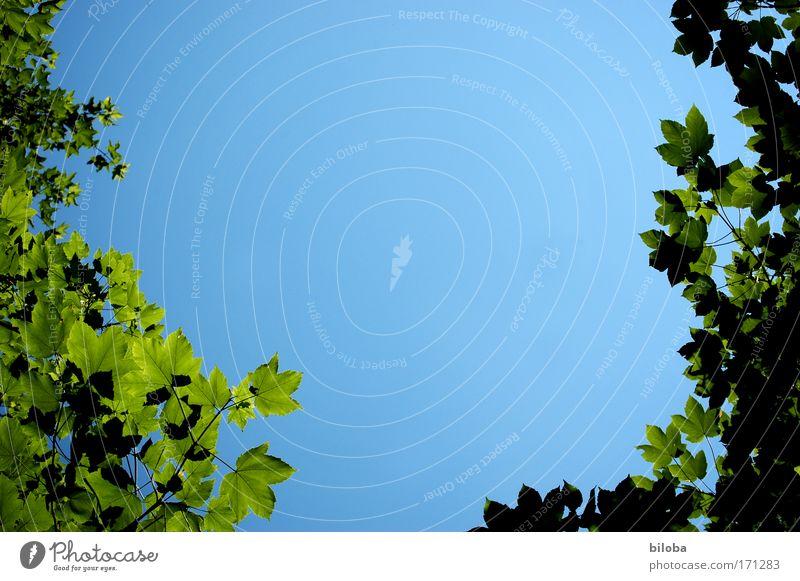 U Farbfoto Außenaufnahme Menschenleer Textfreiraum oben Textfreiraum Mitte Profil Umwelt Natur Pflanze Urelemente Luft Himmel Wolkenloser Himmel Sommer Klima