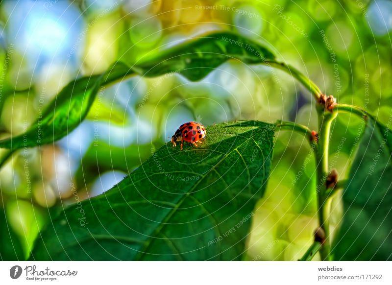 ein freund Natur Pflanze Farbe Blatt Tier Frühling Zufriedenheit Fröhlichkeit Schönes Wetter Käfer Grünpflanze