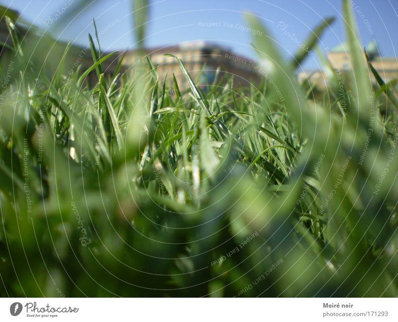 Im Park Farbfoto Außenaufnahme Tag Unschärfe Froschperspektive Wolkenloser Himmel Frühling Fußgängerzone Platz Erholung blau grün Fröhlichkeit Frühlingsgefühle