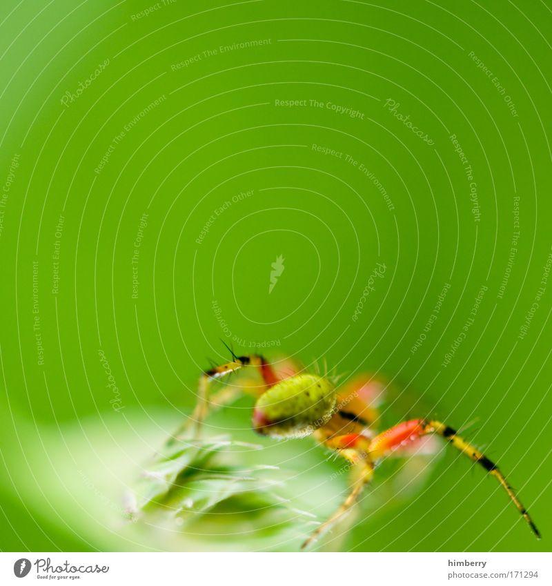 webdesigner Natur Pflanze Tier Leben Umwelt ästhetisch bedrohlich fantastisch außergewöhnlich Wachsamkeit Ekel Respekt exotisch Todesangst Spinne Aggression