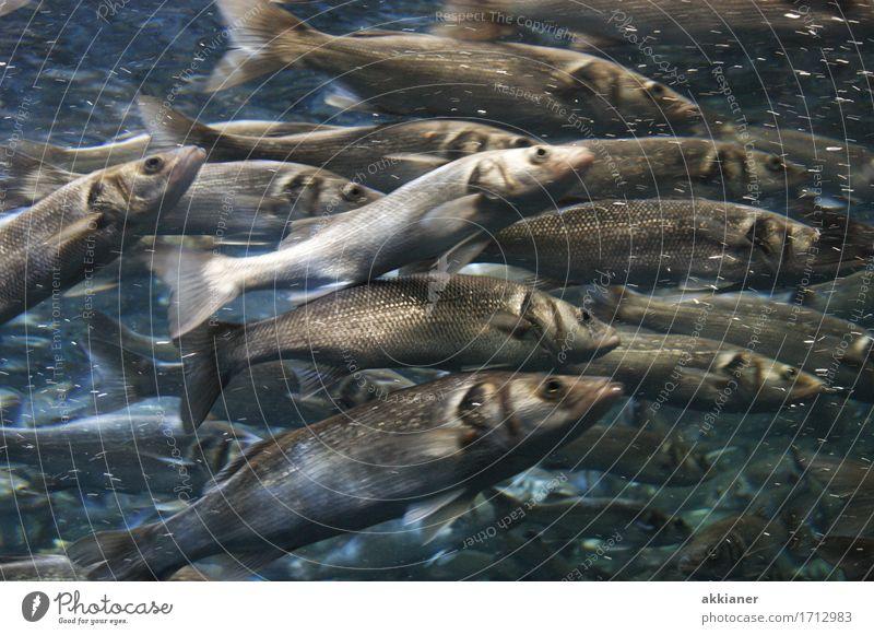 Fische Natur Wasser Tier Umwelt Wildtier Schwarm Aquarium