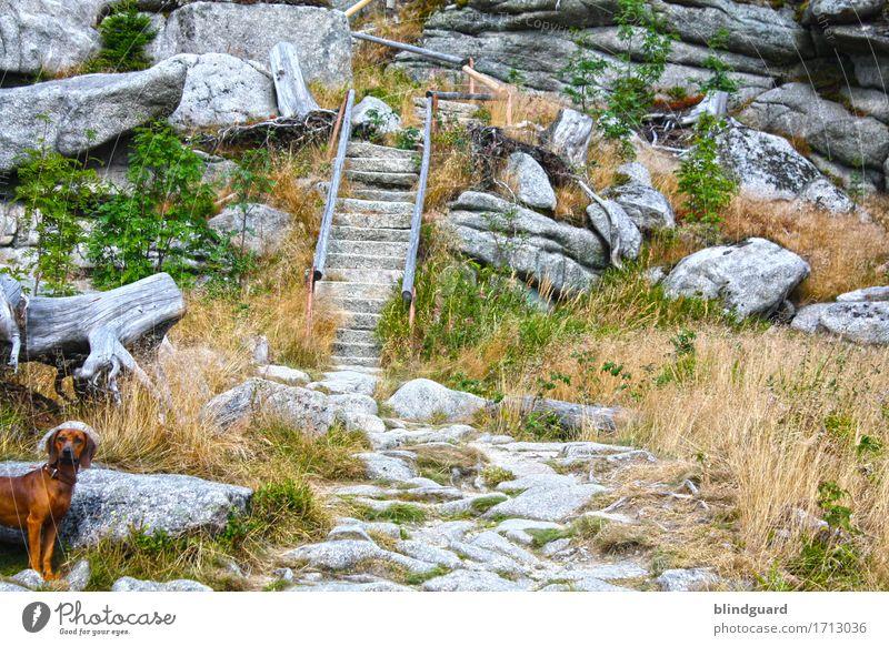 Who Let The Dogs Out | Running Up that Hill Natur Ferien & Urlaub & Reisen Hund Sommer schön Landschaft Tier Berge u. Gebirge Umwelt Gras Tourismus Stein