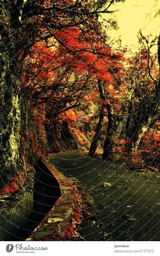 Weg Baum rot Pflanze Sommer Wald gelb kalt Herbst Wärme Wege & Pfade Frühling braun gold laufen Tourismus Zukunft