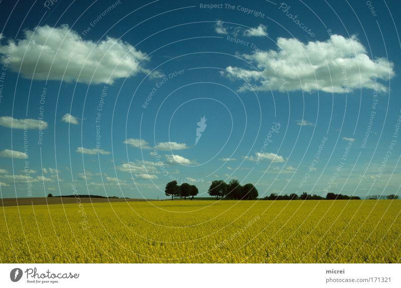 Blickpunkte Farbfoto Außenaufnahme Menschenleer Tag Panorama (Aussicht) Natur Landschaft Himmel Wolken Frühling Schönes Wetter Feld blau gelb weiß Gefühle
