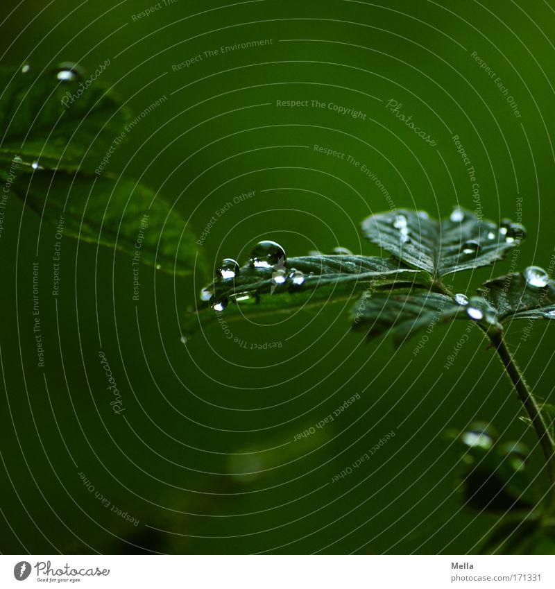 Regentage Natur grün Pflanze Sommer Blatt ruhig Umwelt dunkel Frühling Traurigkeit Stimmung Klima glänzend natürlich nass Wachstum