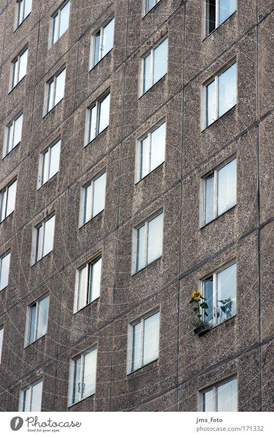 Blume am Fenster Leben Hochhaus Fassade Häusliches Leben Sonnenblume Ghetto Individualist