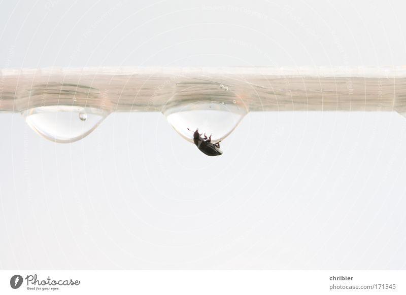 Blöder Mist, blöder!!! -85- Natur weiß Tier schwarz klein Regen Angst nass Wassertropfen berühren Unwetter Todesangst hängen silber Verzweiflung