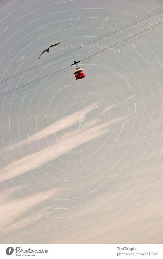 Hoch hinaus Wolken Ferne Himmel (Jenseits) Vogel fliegen frei Luftverkehr Niveau Flugzeug Möwe Lachmöwe Seilbahn Drahtseil im Flugzeug Höhenflug