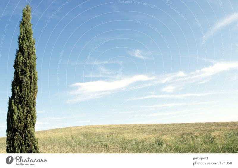 USP - Alleinstellungsmerkmal Natur Himmel Baum grün blau Pflanze Sommer Ferien & Urlaub & Reisen gelb Ferne Erholung Wiese Freiheit Wege & Pfade Landschaft Feld