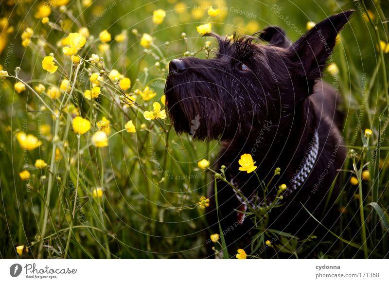 Gute Nase Hund Natur schön Pflanze Blume Tier ruhig Umwelt Leben Wiese Freiheit Bewegung Gras Blüte Traurigkeit träumen