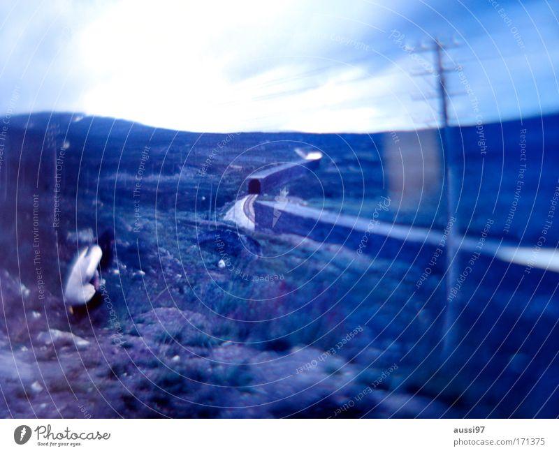 Analogue hope Farbfoto Außenaufnahme Dämmerung Unschärfe Weitwinkel Rückansicht Blick nach unten Wegsehen Frau Erwachsene 1 Mensch Umwelt Klimawandel Hügel
