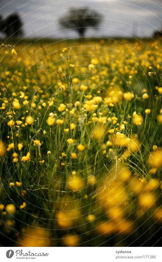 Ein weites Feld Natur schön Baum Blume Pflanze ruhig Leben Wiese Gefühle Blüte Gras Bewegung Frühling Freiheit Glück träumen